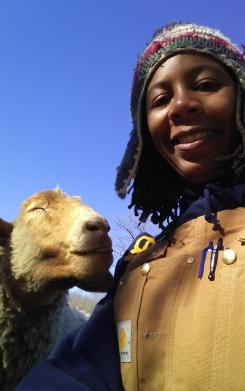 sheep kiss