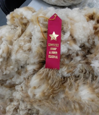 Our ram Clancy placed fiber Fest winner 2018, our first year entering!
